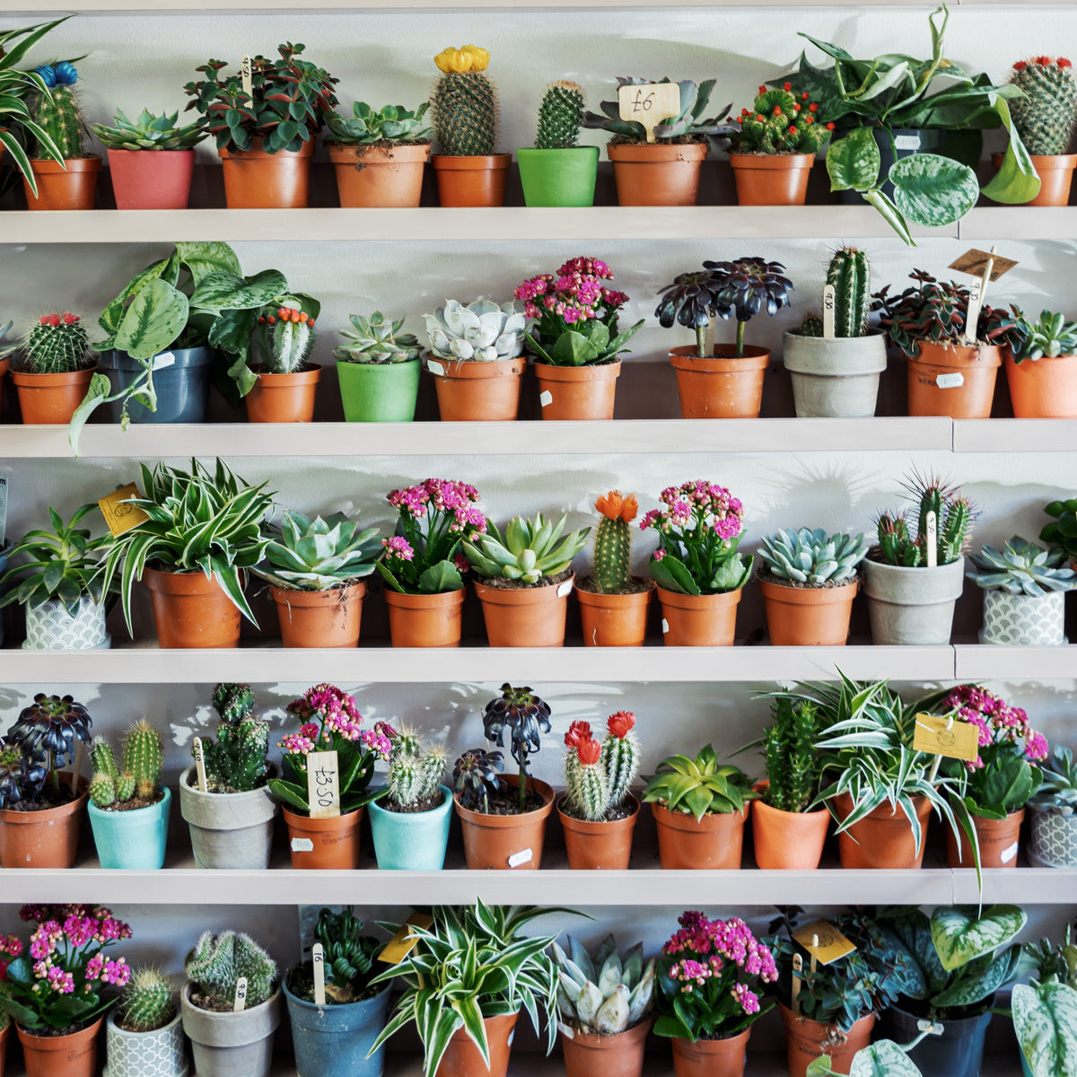 How indoor plants can improve your mental wellbeing
