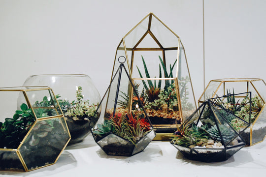 Terrariums Workshop