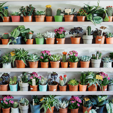 Indoor plants and mental health