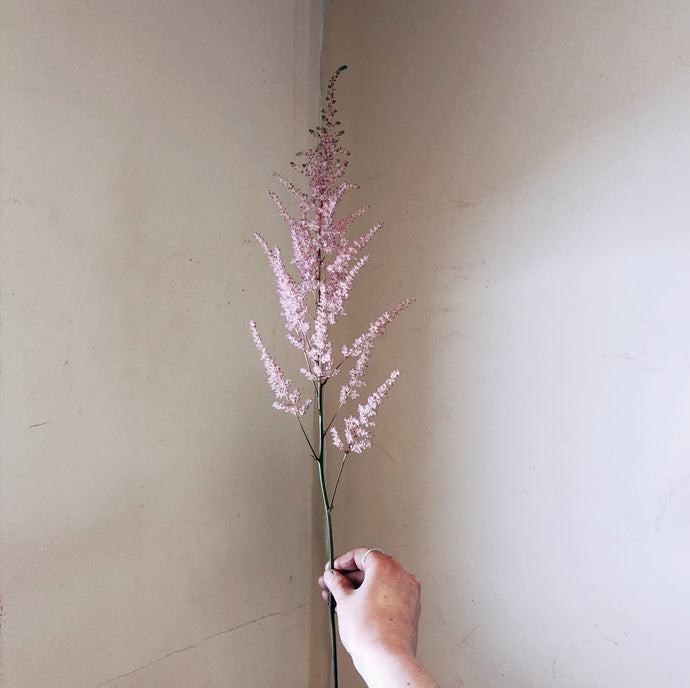 Astilbe Rosey Pink