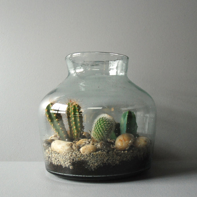 Medium Glass Jar Terrarium