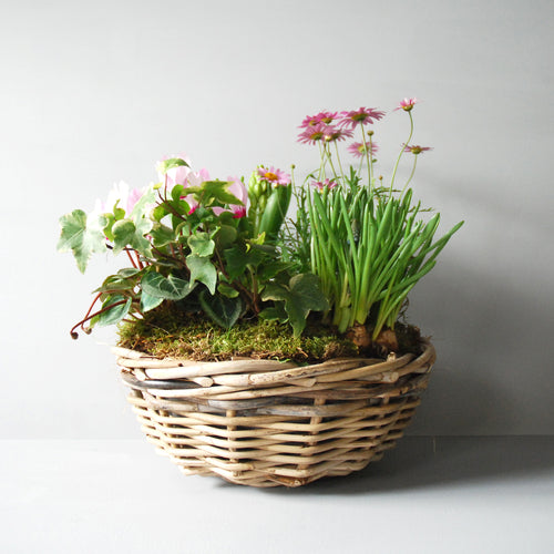Small Planted Spring Basket