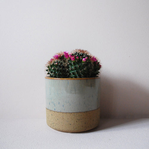 Small Potted Flowering Cacti