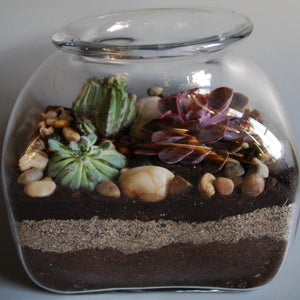 Large Glass Jar Terrarium