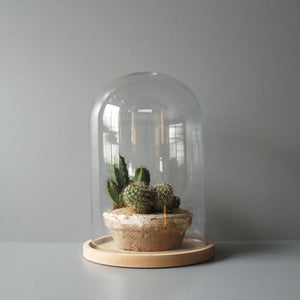 Small Glass Cloche Terrarium