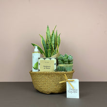 Houseplant Lover's Gift Belly Basket (S)