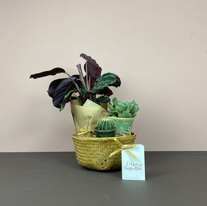 Houseplant Lover's Gift Belly Basket (XS)