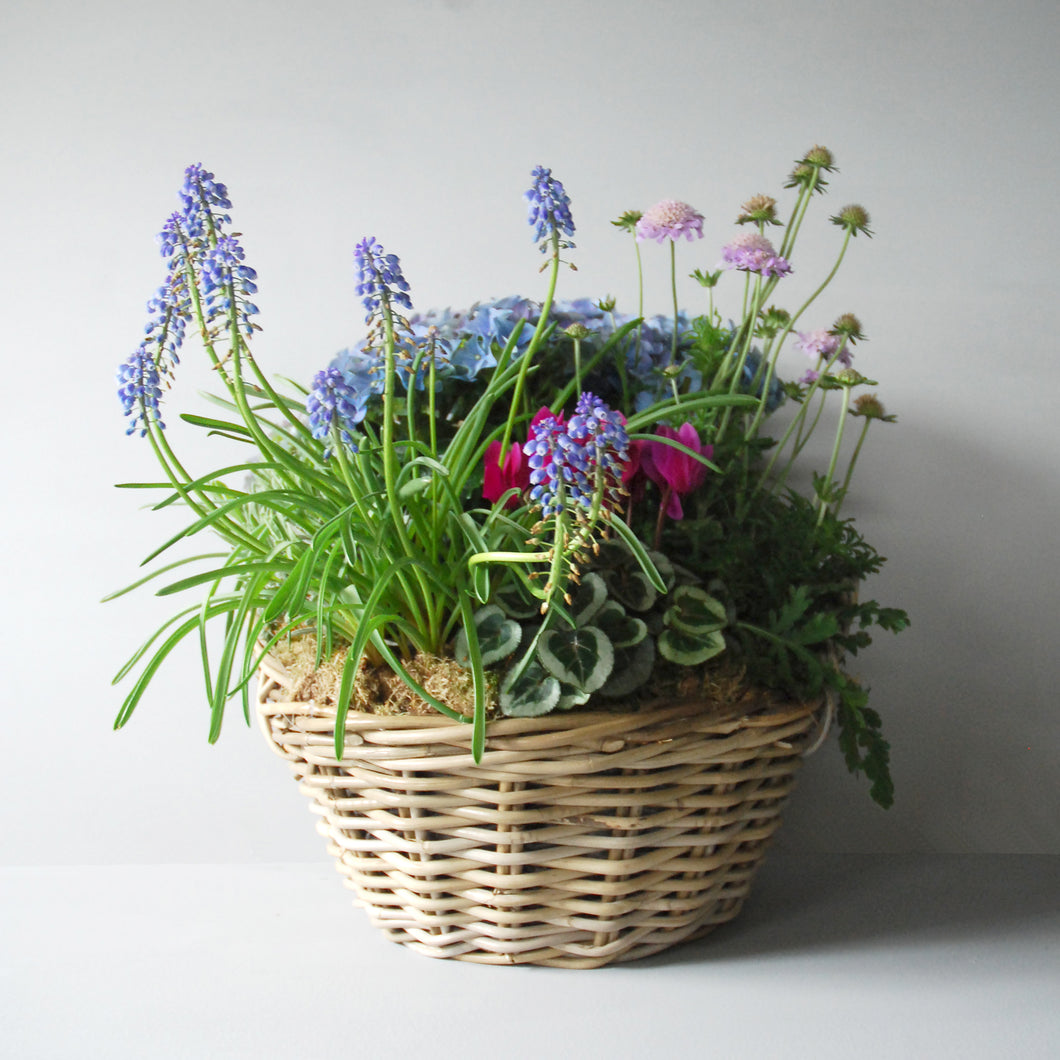 Large Planted Spring Basket
