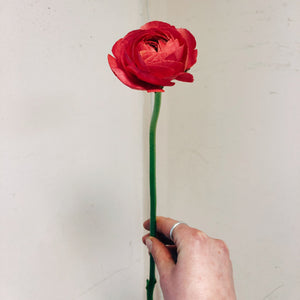 Strawberry Ranunculus