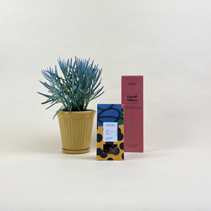 Good Vibes Valentine's Gift Combination (S)