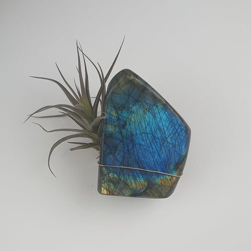 Labradorite | Air Plant Crystal | Love, Maddy
