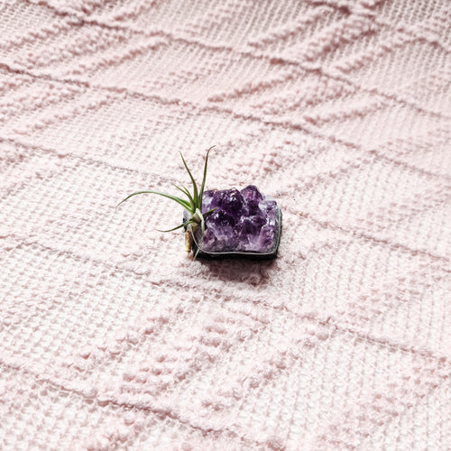 Amethyst | Air Plant Crystal | Love, Maddy