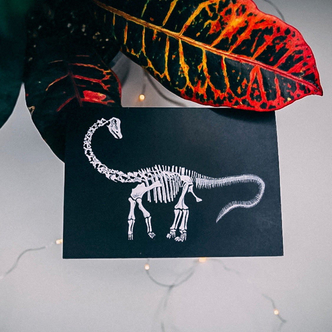 Diplodocus Dinosaur Skeleton - Greetings Card