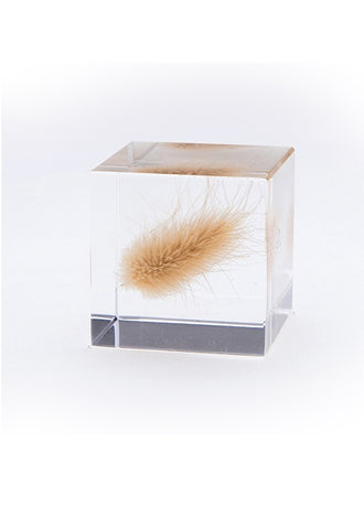 USAGI NO NEDOKO Sola Cube - Bunny Tail Grass