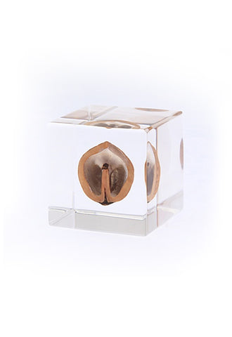 USAGI NO NEDOKO Sola Cube - Japanese Walnut