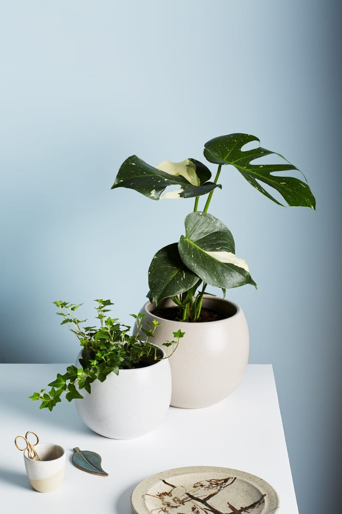 EVERGREEN COLLECTIVE - BOWER POT - SMALL - SOFT WHITE - Tempted Kensington