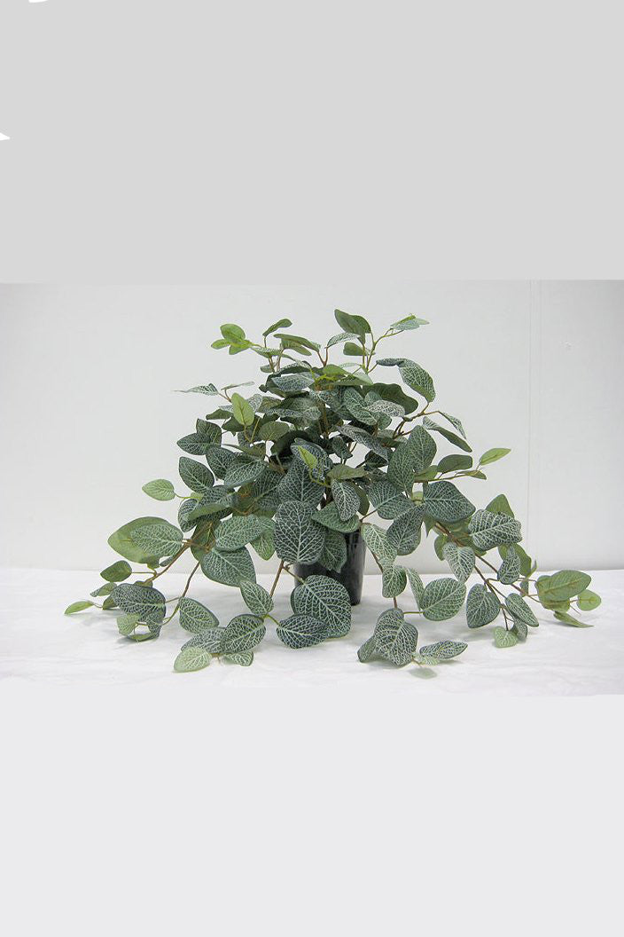 PLANT FITTONIA BUSH POTTED ARTIFICAL - Tempted Kensington
