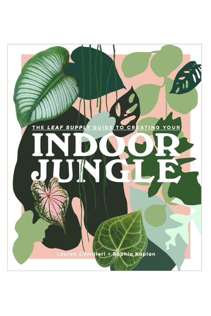 THE LEAF SUPPLY GUIDE TO CREATING YOUR INDOOR JUNGLE - Tempted Kensington