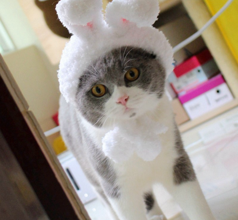 Bunny Bonnet For Cats | Pet Apparel