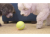 PetCaveCo™ Milo Ball - Motion Activated Pet Pal