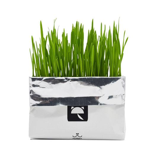 All-In-One Cat Grass Kit