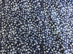 100% Cotton Fresh & Fruity Blueberries