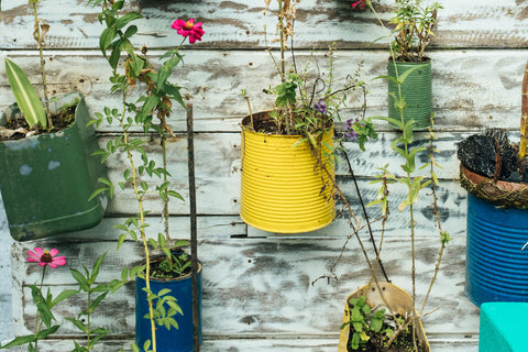 Repurposed tins for flower pots