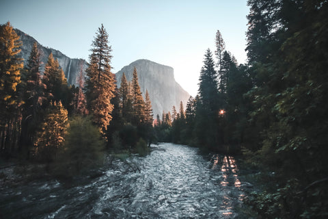 Trees and river bank