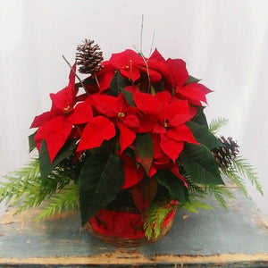 Winter Holiday Flowers and Gift Baskets