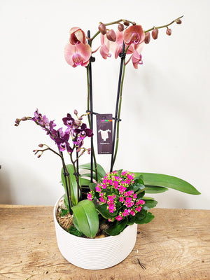 Potted Plants & Succulents