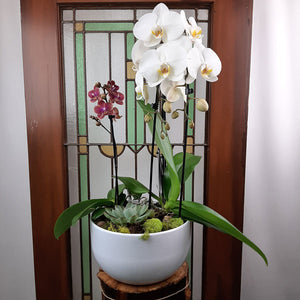Custom Design Planter Garden - 4 (Orchids & Succulents)