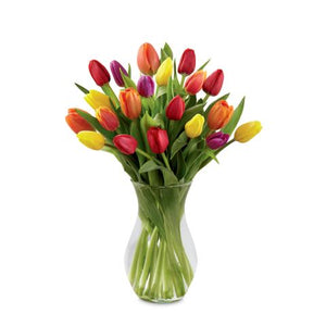 The Bright Spring Bouquet (20 fresh cut tulips)
