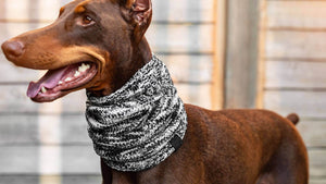 CANADA POOCH Chenille Snood GREY MIX