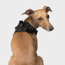 Load image into Gallery viewer, CANADA POOCH Everything Harness (7 variants available)
