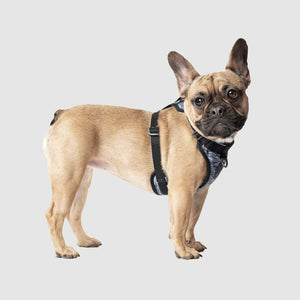 CANADA POOCH Everything Harness (7 variants available)