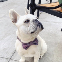 Load image into Gallery viewer, BARKHOLIC Francis Bow Tie