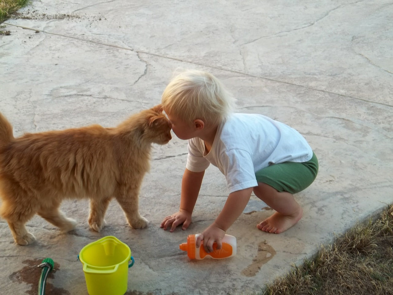 dog with little child
