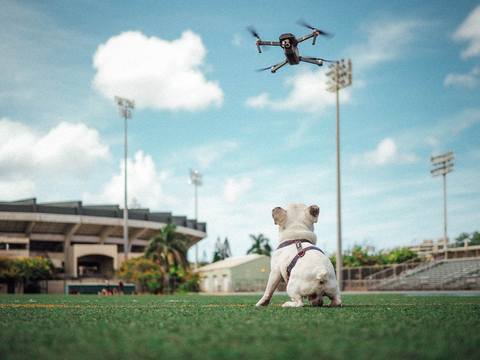 dog looking at flying drone
