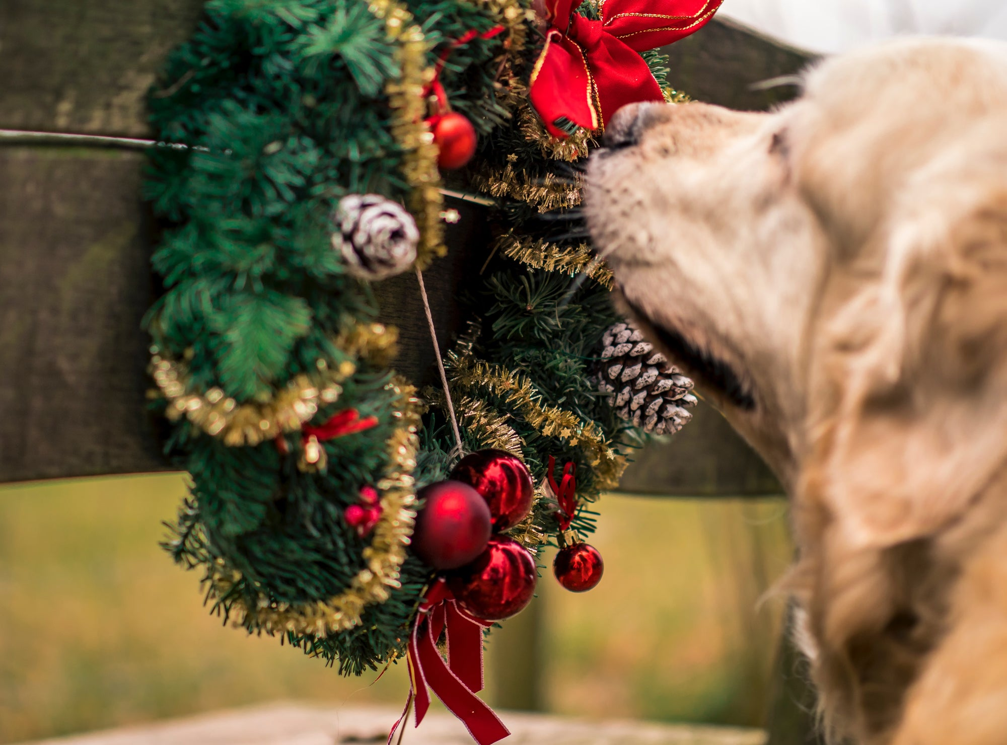9 Amazing Christmas Gifts for Dogs