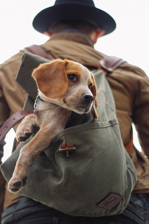 man with dog in backpack