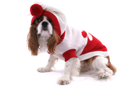 dog-in-christmas-jacket