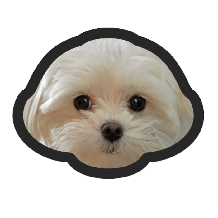 Pet Face Cushion (4299807031353)