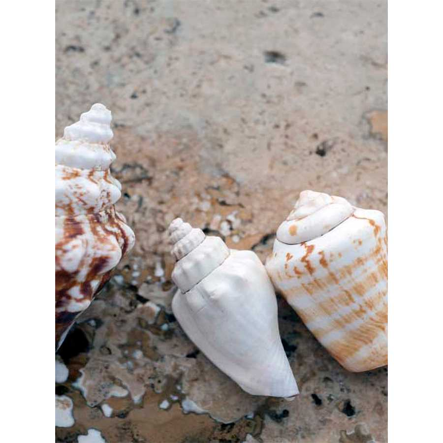 GIFTS OF THE SHORE IV by Elena Ray , Item#CG002155C, Matte Canvas, Art, Giclée on Canvas, Vertical, Small