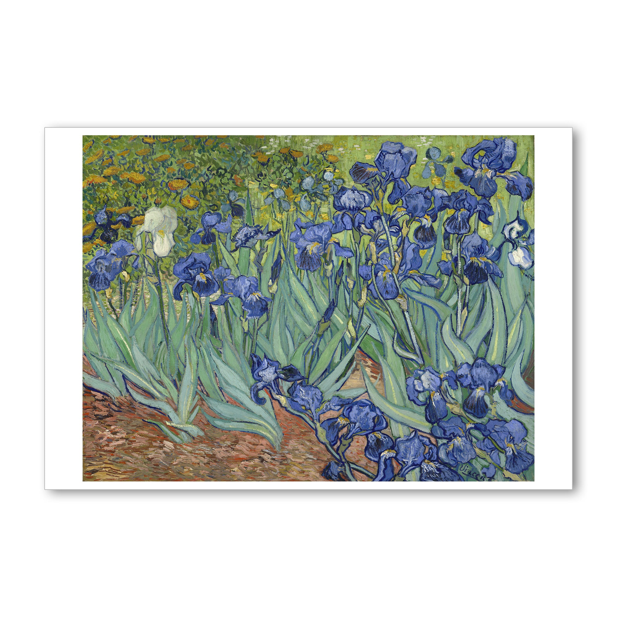 "Van Gogh Irises- 5""x7"" Note Card 