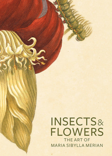 Insects and Flowers: The Art of Maria Sibylla Merian