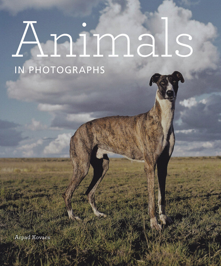 Animals in Photographs | Getty Store