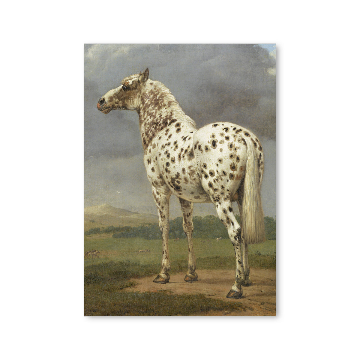 Potter- The Piebald Horse- Postcard  | Getty Store