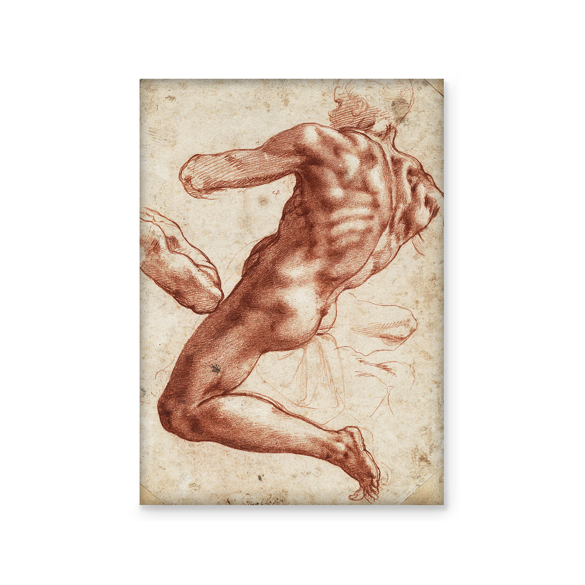 Magnet - Michelangelo Seated Male Nude and a Study of His Right Arm