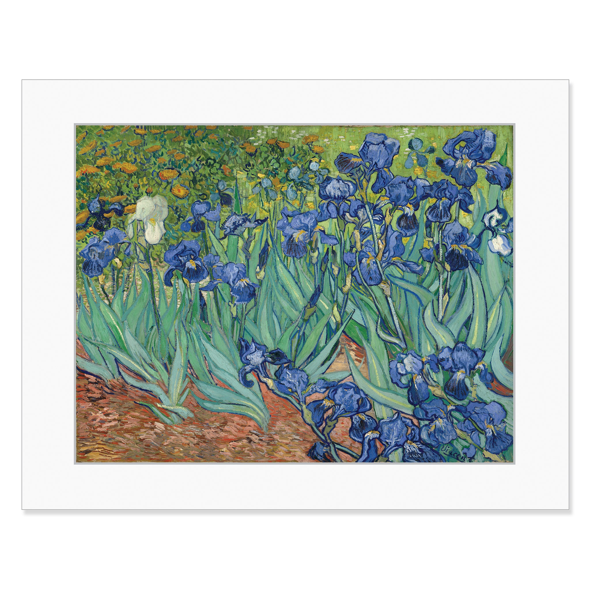 Van gogh irises 11 x 14 matted print the getty store van gogh irises 11 x 14 matted print reviewsmspy