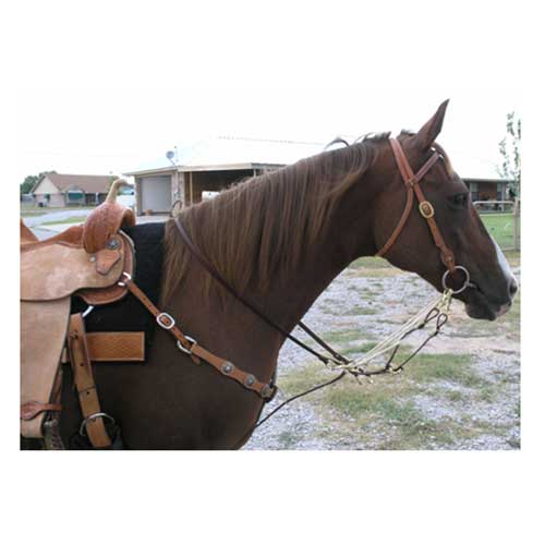 German Martingale Tack - Training - Headgear Teskey's Teskeys